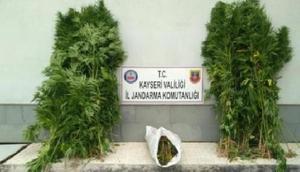 Kayseride jandarmadan uyuşturucu operasyonu: 4 gözaltı