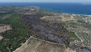 Çanakkale'de yanan ormanlık alan havadan görüntülendi