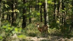 Kocaelideki Uzuntarla Tabiat Parkı Ormanya hayvan popülasyonuna katkı sağlayacak