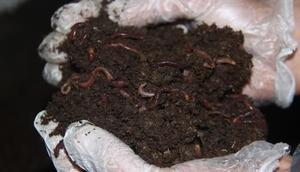 Gümüşhanede solucan gübresiyle organik tarım başladı