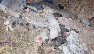 Uşakta 5 ölü köpek yavrusu bulundu
