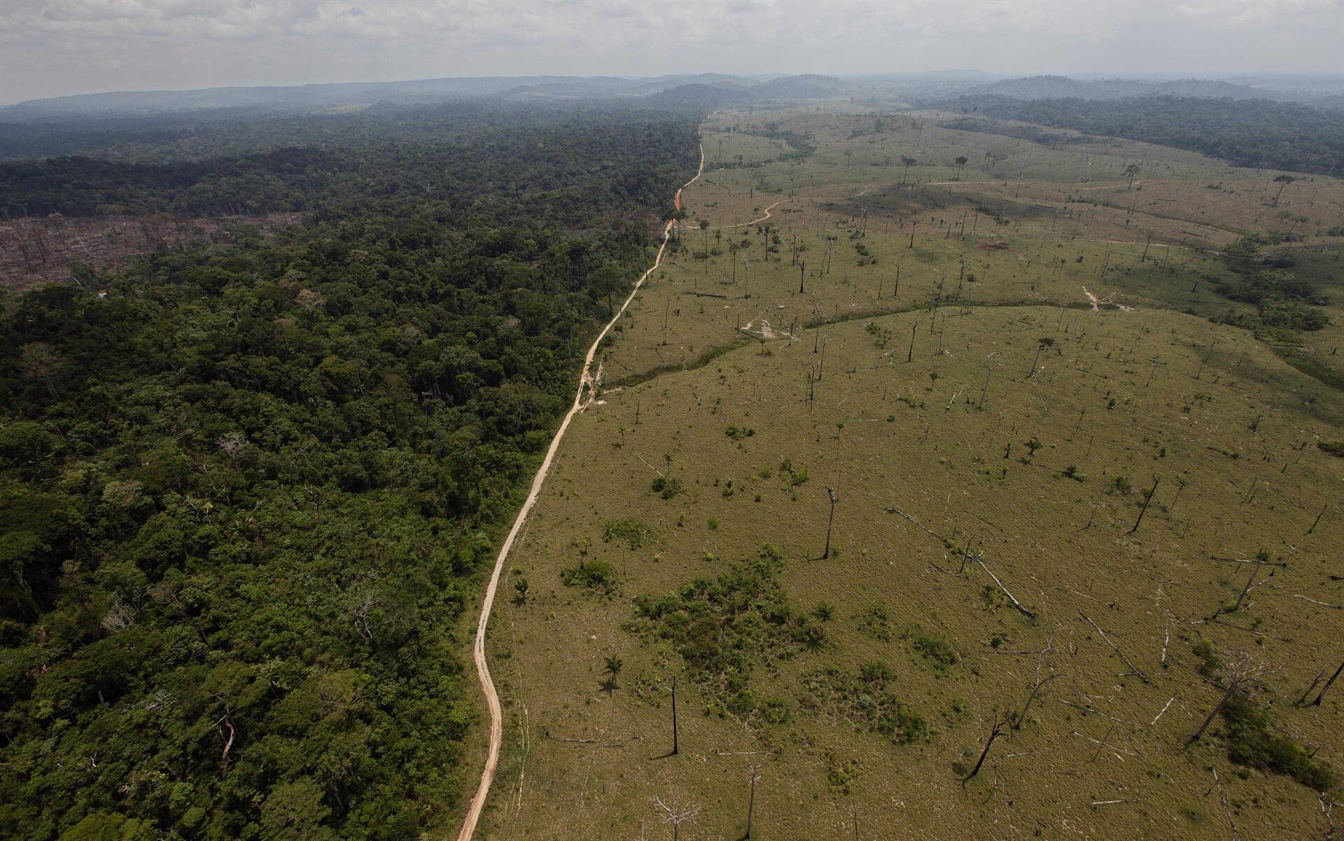 Amazon Deforestation At Alarming Levels