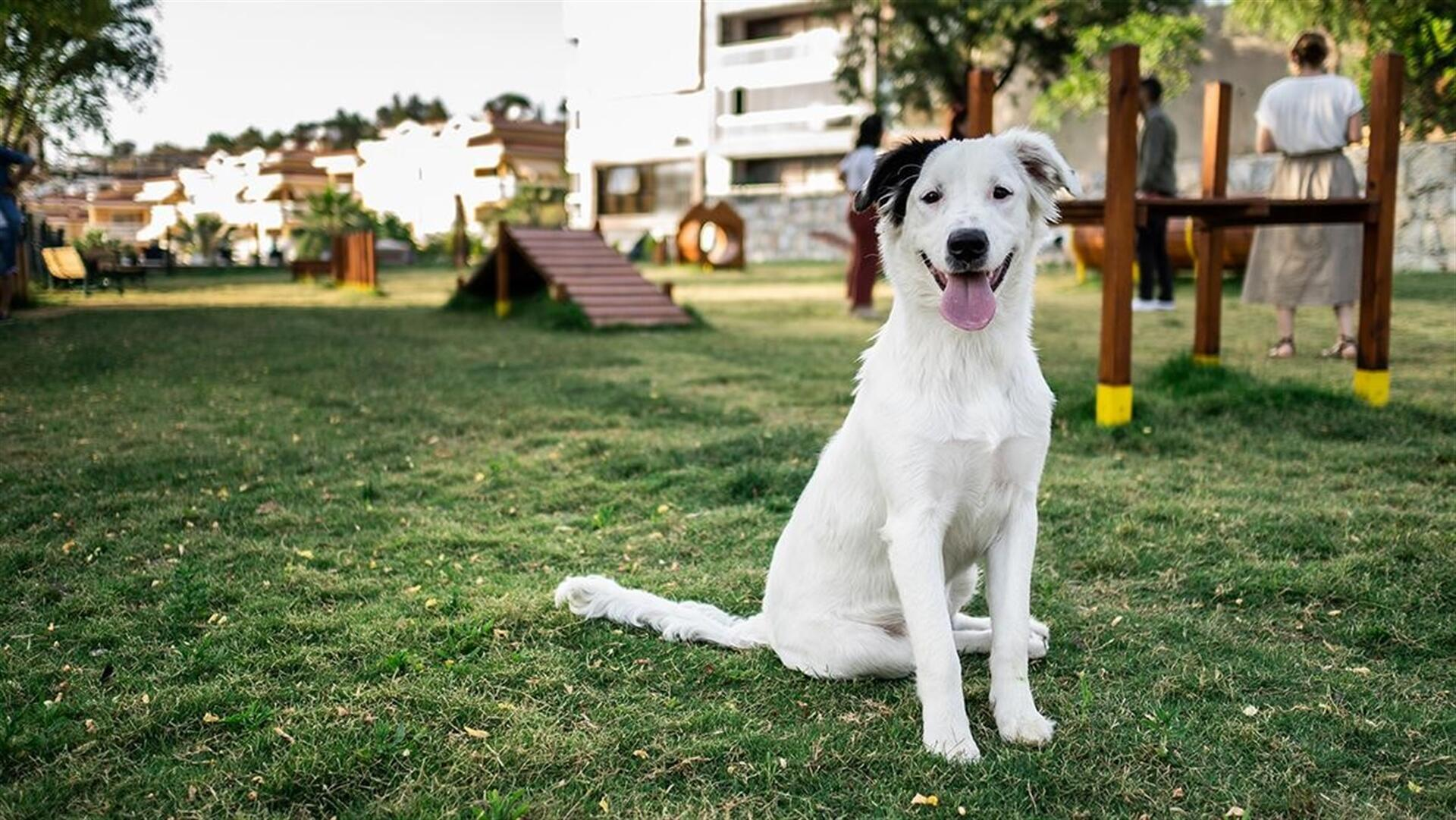 Dog park becomes meeting spot in resort town