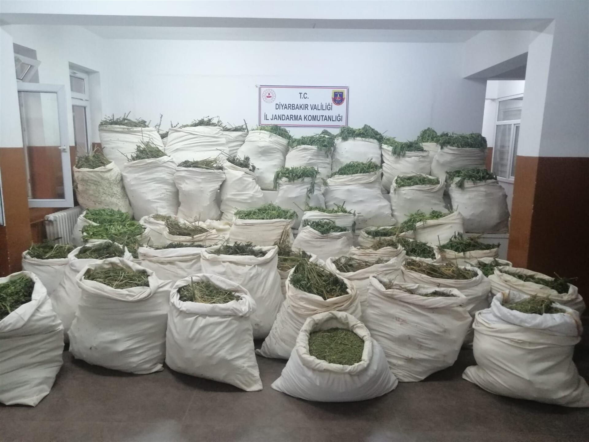 More than 10.1 mln cannabis roots seized in Turkey