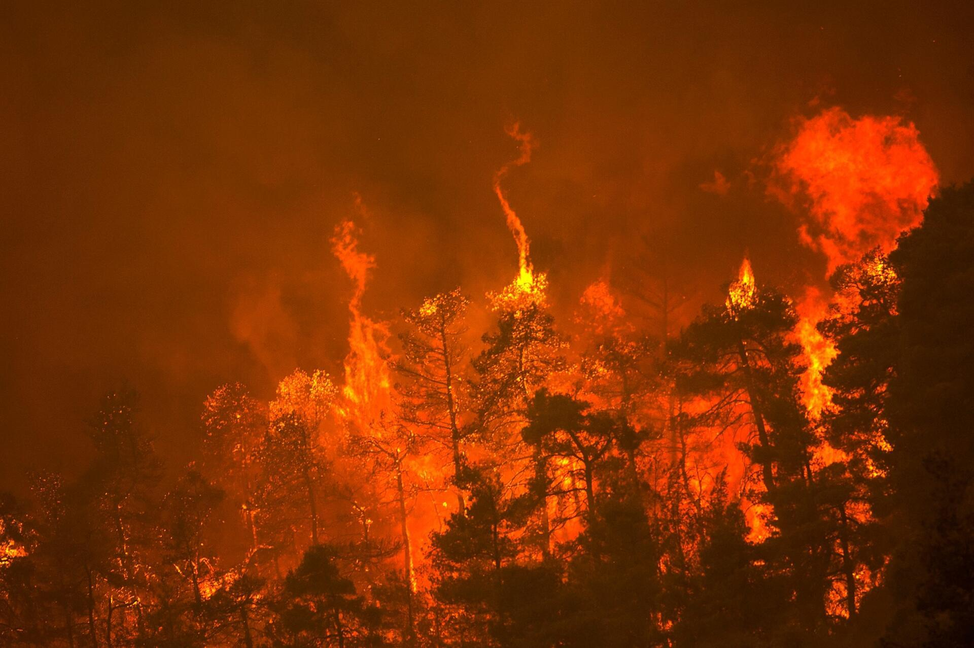 Wildfires rampage in Greek forests, cut large island in half - World News
