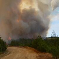 Forest fire erupts in Gelibolu