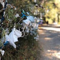 Face masks replace threads on wish trees on Istanbul island