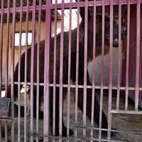 Image Two rescued bears head for US from crisis-hit Lebanon