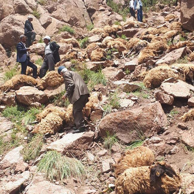 500 sheep die in 'mass suicide jump' in eastern Turkey