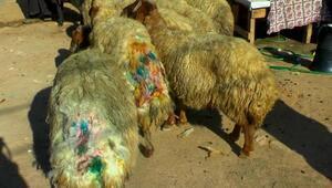 Merkez Haberleri: Muşta, çığ düşünce mahsur kalan 11 kişi kurtarıldı 67