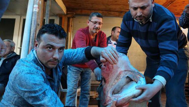 5 metre boyunda köpek balığı yakalandı