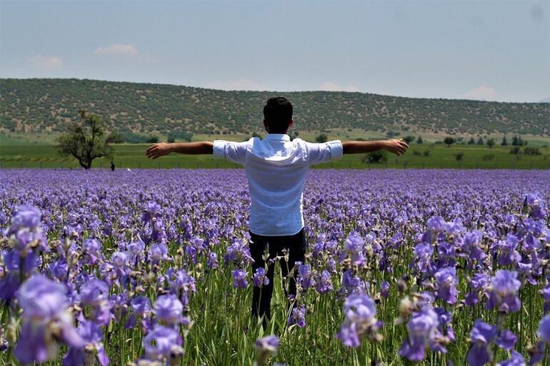 Ispartadaki zambak tarlaları turistlerin ilgi odağı