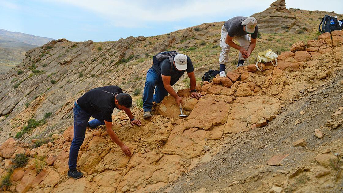 Iğdır'da bulunan yaprak ve midye fosilleri geçmişi aydınlatacak