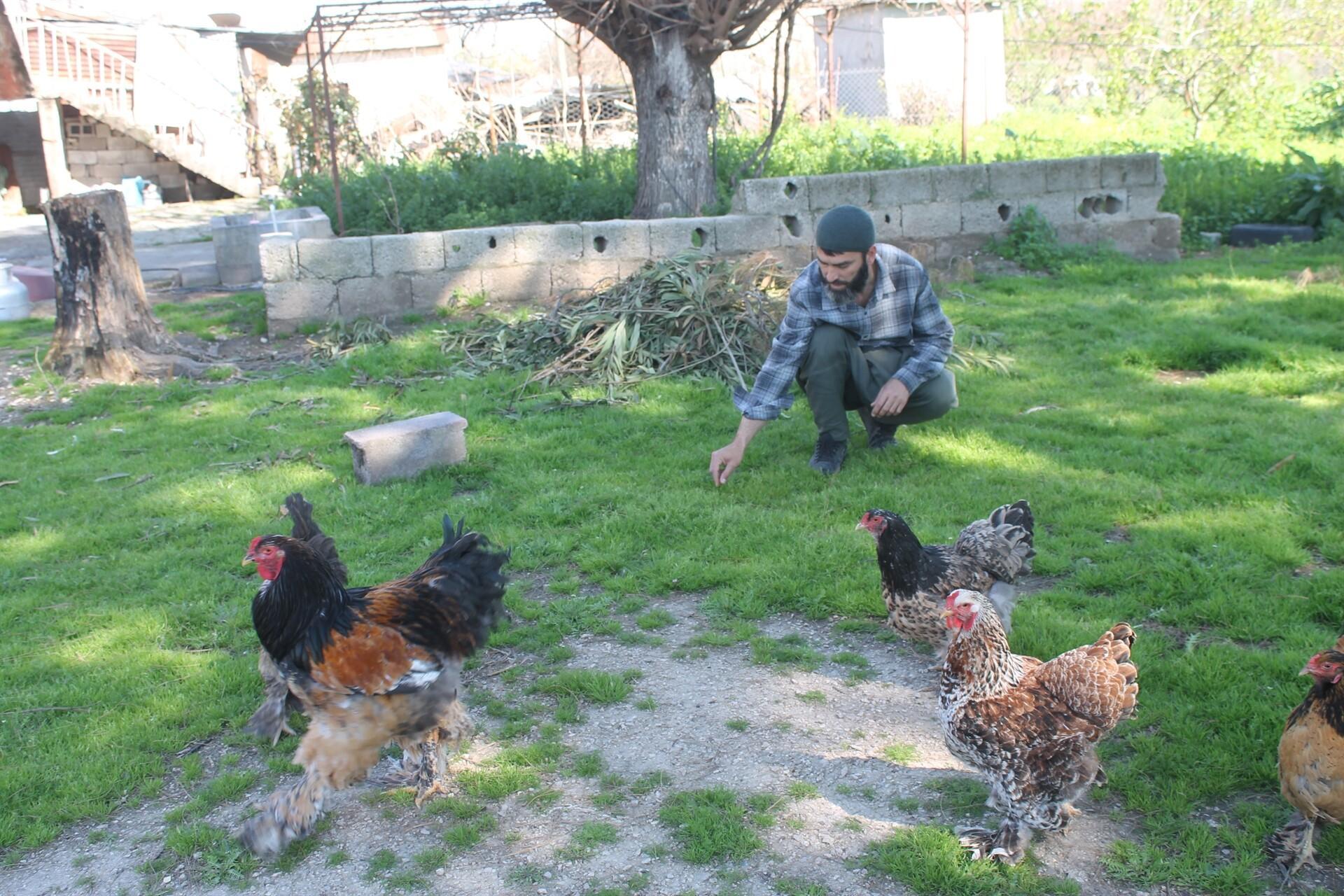 Yumurtası 400, civcivi 1000 lira! Adana'dan birçok ülkeye ihraç ediliyor