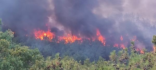 Son dakika... Çanakkale'de orman yangını! Havadan ve karadan müdahale ediliyor
