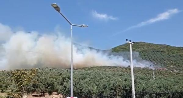 Gemlik'te zeytinlikte korkutan yangın