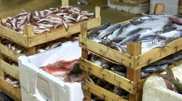 Gürpınar Balık Hali'nde ilk mezatlar gerçekleşti