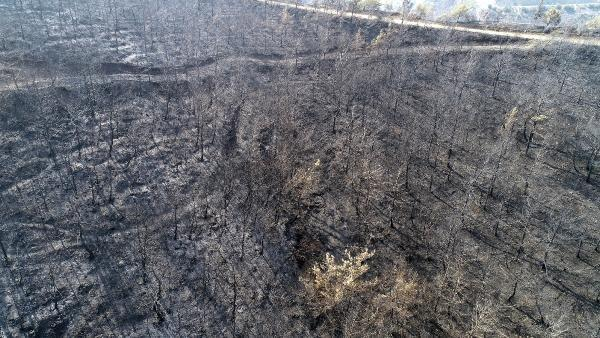 Hatay'da yanan ormanlık alan havadan görüntülendi