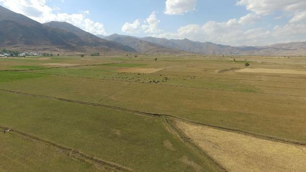 Yüksekova'da 600 bin dönüm arazi kurudu! 'En son 50 yıl önce böyle bir kuraklık görmüştük'