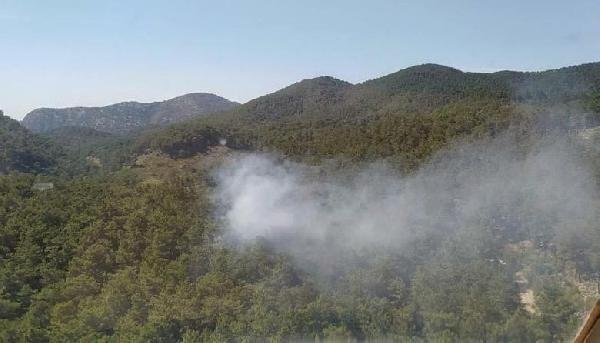 Muğla'da orman yangını! 2 hektar kızılçam küle döndü