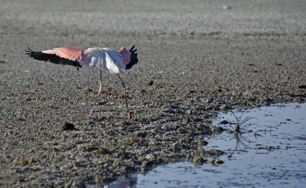 Son dakika haberler: Türkiye'de kuraklık tehlikesi! 'Olağanüstü hal ilan edilmeli'