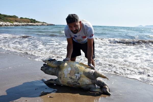 Nesli tükenme tehlikesi altında... Antalya'da ölü bulundu