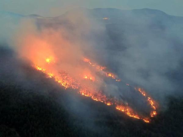 Muğla'daki orman yangınında sabotaj şüphesi! Soruşturma başlatıldı