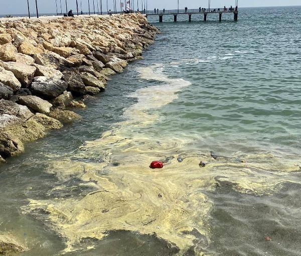 Mersin'de deniz üstündeki sarı tabakanın sebebi belli oldu