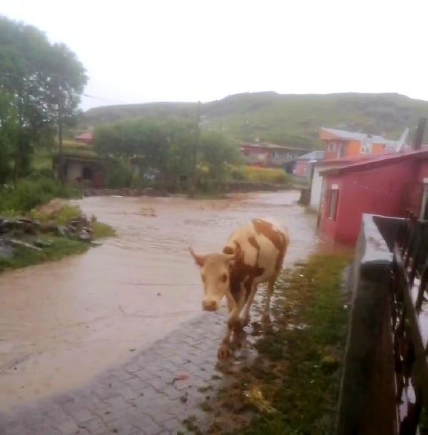 Ardahan'da kuvvetli yağmur sele dönüştü!