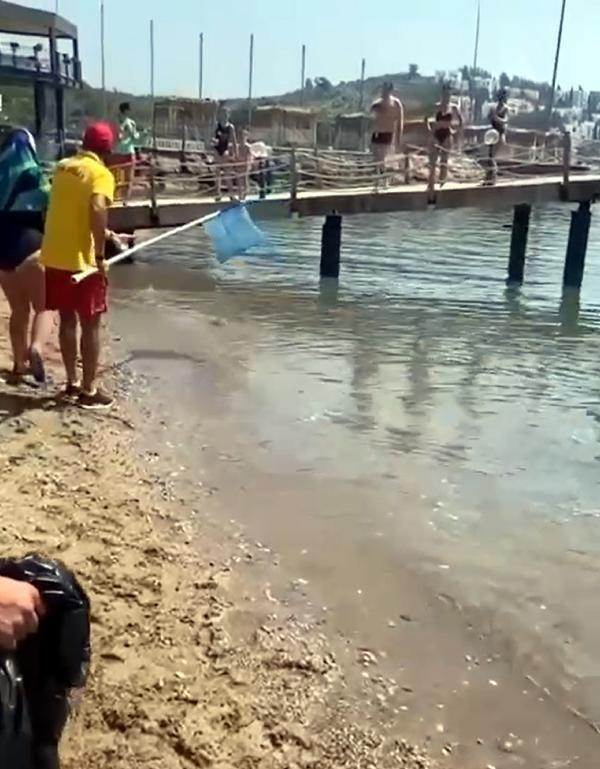 608eb1dd4e3fe1069cd58975 - Antalya'da tedirgin eden görüntü! Balon balıkları kıyıya kadar geldi, turistler kaydetti