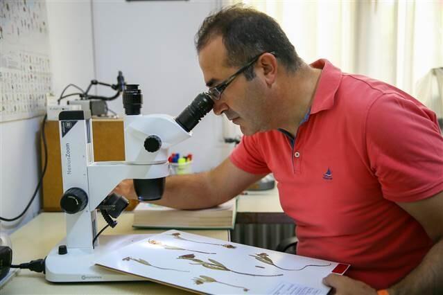 Amanos Dağları'nda ters lale türü keşfedildi