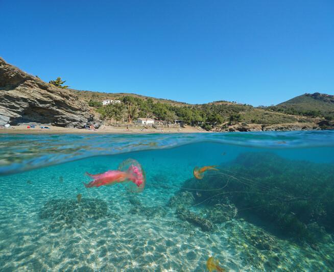Komşu kıyıda denizanası istilası... Türkiye'ye gelir mi? 'Altını çizmekte fayda var, çok zehirliler...'