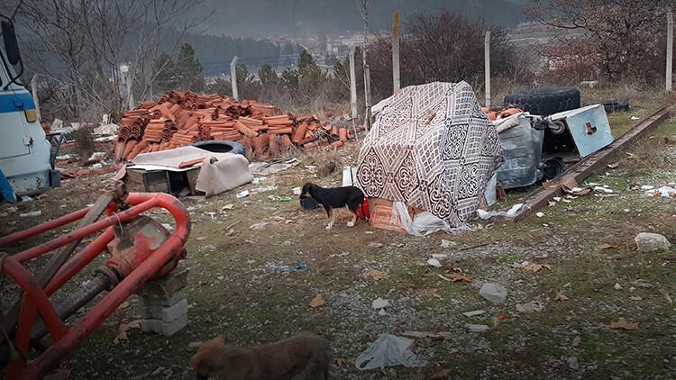 Kastamonu'da yürekleri sızlatan görüntü