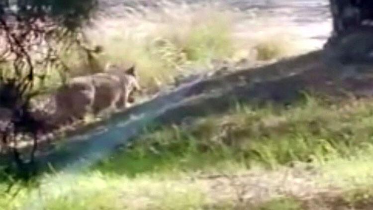Dikkat! Antalya'da hayvanat bahçesinden kaçtı...