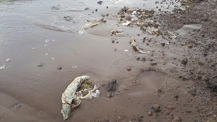 Süphan Gölü'nde tedirgin eden 'balık' ölümleri