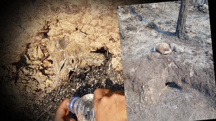 Manavgat'ta kaplumbağanın mucize kurtuluşu